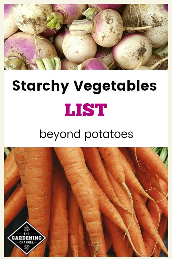 turnips and carrots with text overlay starchy vegetables list beyond potatoes