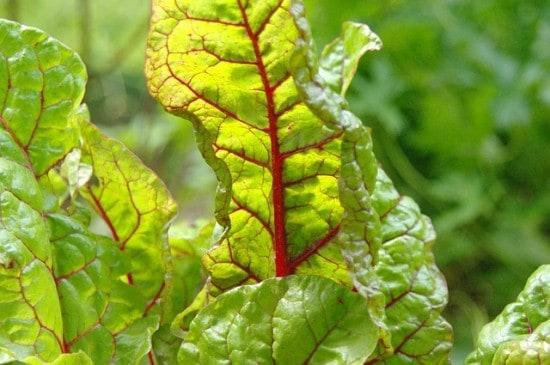 leafy greens list