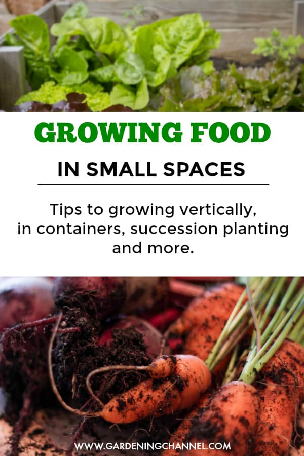 raised bed garden and carrots with text overlay growing food in small spaces tips for growing vertically, in containers, succession planting and more