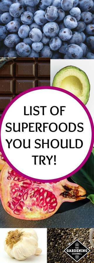 superfoods you should try