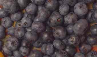 Grow your own blueberries with these tips