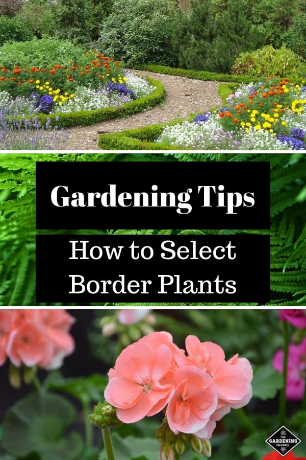 border landscaping ferns and geraniums with text overlay gardening tips how to select border plants