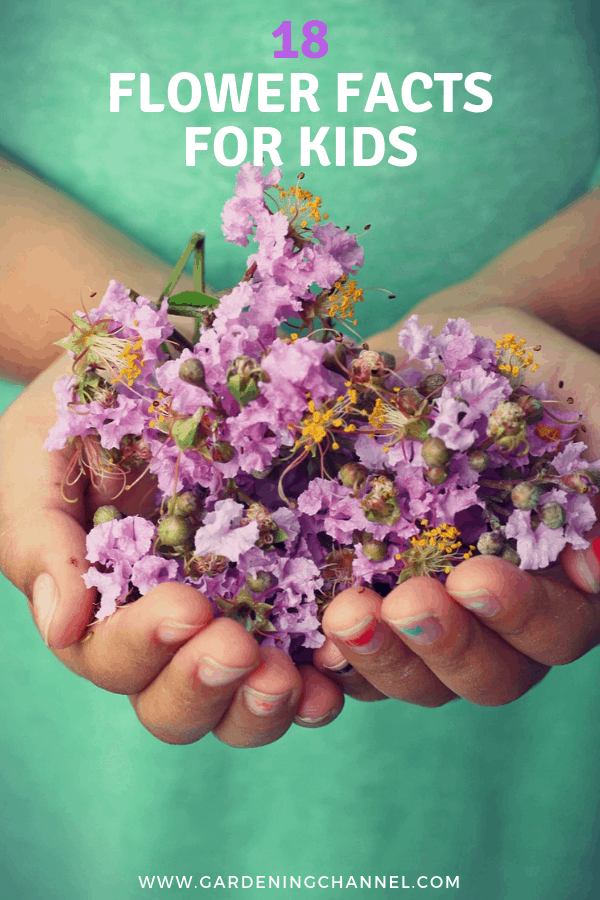 childs hands hold tree blossom flowers with text overlay eighteen flower facts for kids