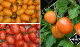 Roma Tomatoes: Calories and Nutritional Information