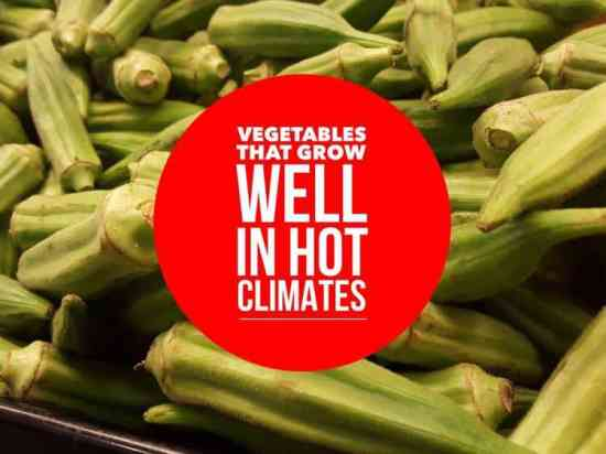 herbs and vegetables that grow in hot climates