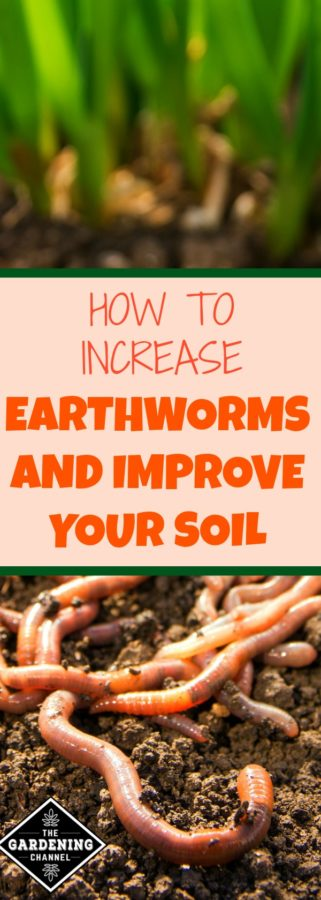 how to increase earthworms