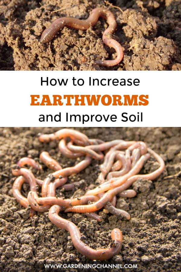 earthworms in soil with text overlay how to increase earthworms and improve soil