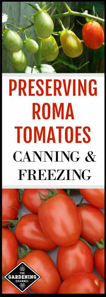 Grow and preserve your own roma tomates. Roma tomatoes are also known as Italian or plum tomatoes. With their prolific yields of meaty, sweet fruit, they make the ideal tomato for sauces, canning and freezing.