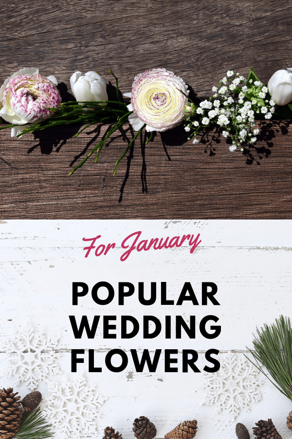 white tulips ranunculus pine cones with text overlay popular wedding flowers for january