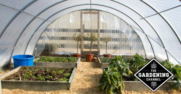 vegetable garden beds inside greenhouse