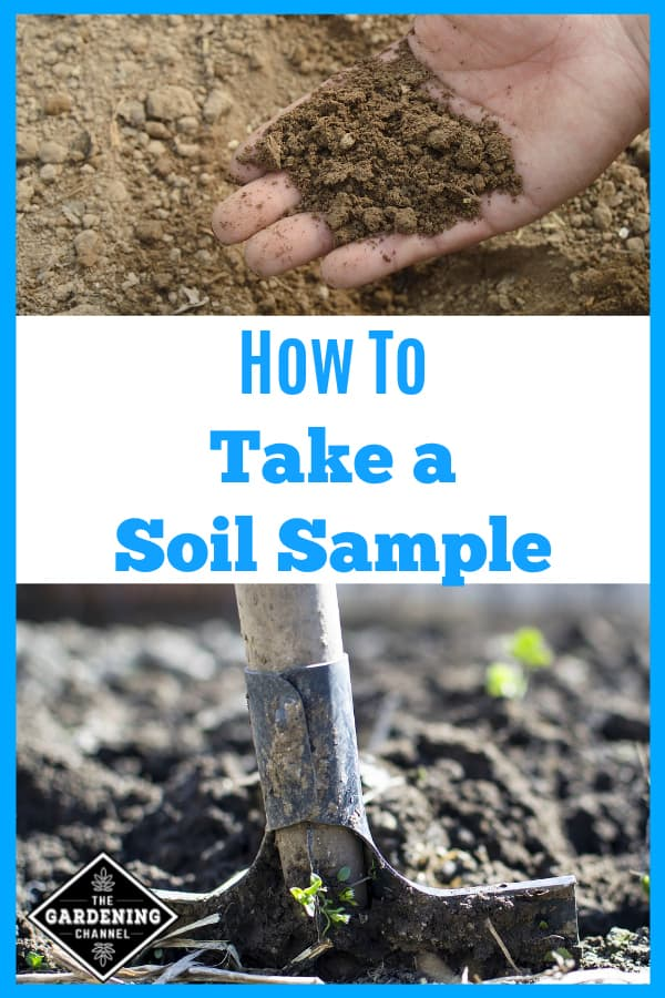 garden soil in hand and shovel in garden soil with text overlay how to take a soil sample