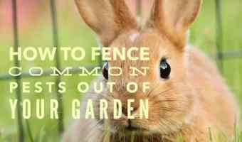 how to fence animals from vegetable garden