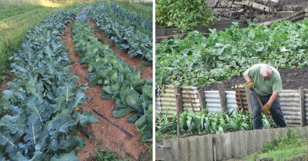 staggered rows garden