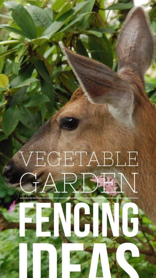 vegetable garden fencing ideas pinterest pin