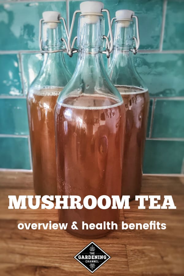 kombucha with text overlay mushroom tea overview and health benefits