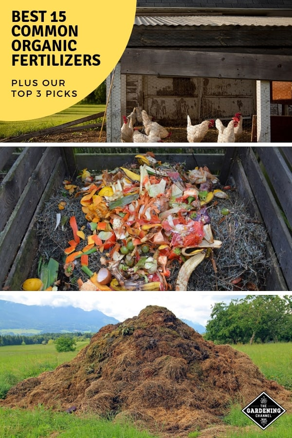chicken manure compost and cow manure with text overlay best common organic fertilizers plus our top three picks