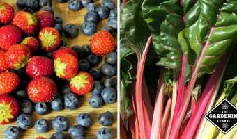 berries and swiss chard