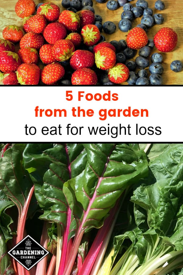 strawberries and blueberries and swiss chard with text overlay five foods from the garden to eat for weight loss