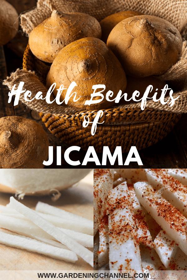 harvested jicama sliced jicama seasoned jicama with text overlay health benefits of jicama