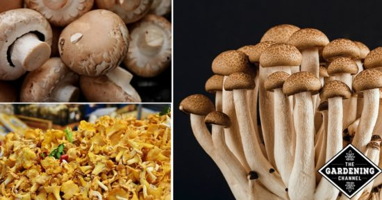 mushroom types from A to Z
