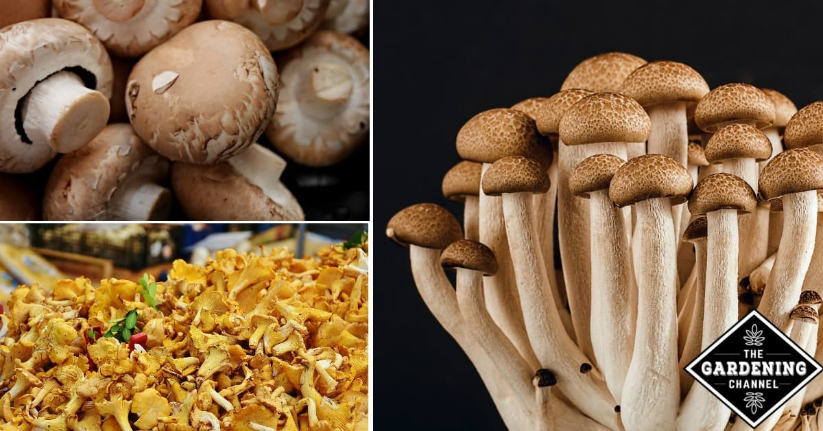 List Of Mushroom Types From A To Z