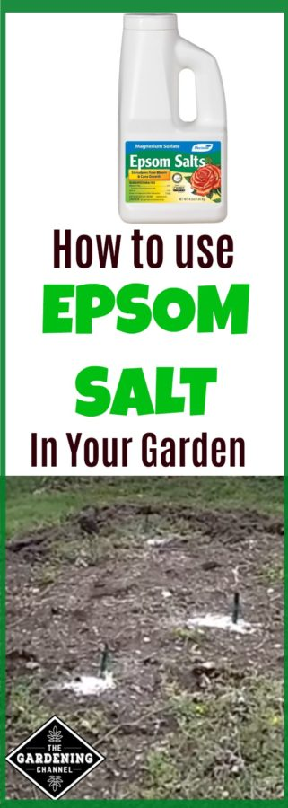 Epsom Salt in the Garden