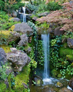 Learn how to create a Japanese garden