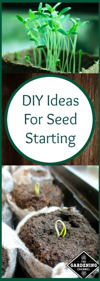 diy seed starting tips