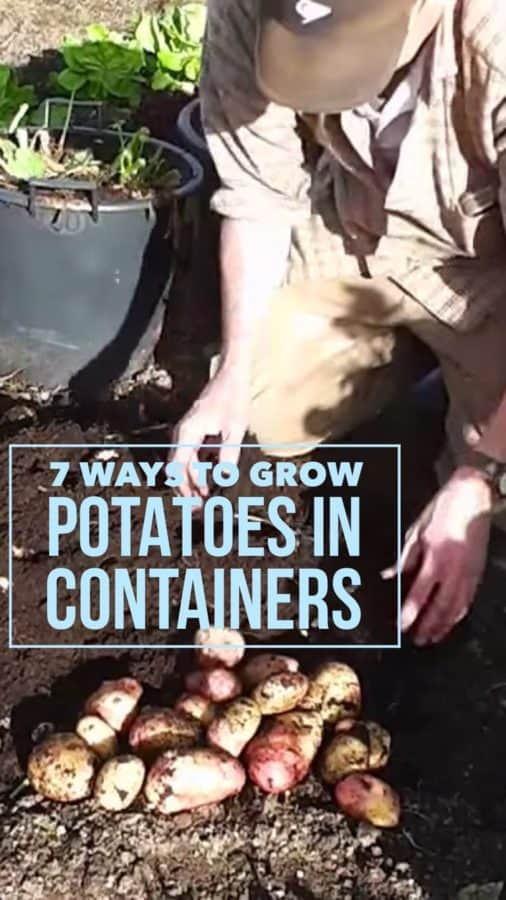 grow potatoes in containers