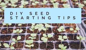 Great DIY Ideas for Seed Starting