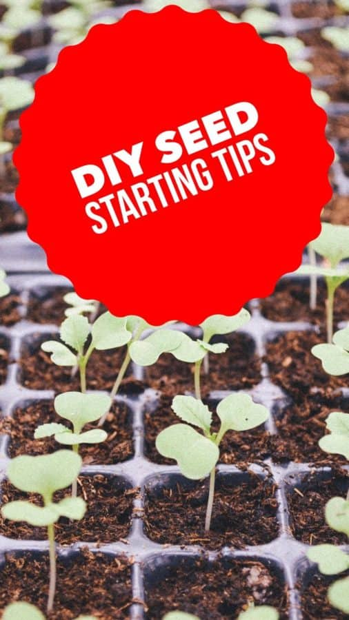 Want to start your vegetable garden from seeds this year? Follow these ideas for the best seed starting tips.