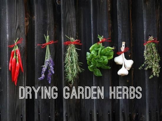 How to Dry Garden Herbs