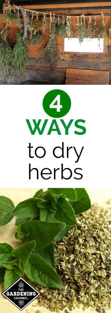 herbs hanging to dry dried oregano with text overlay 4 ways to dry herbs