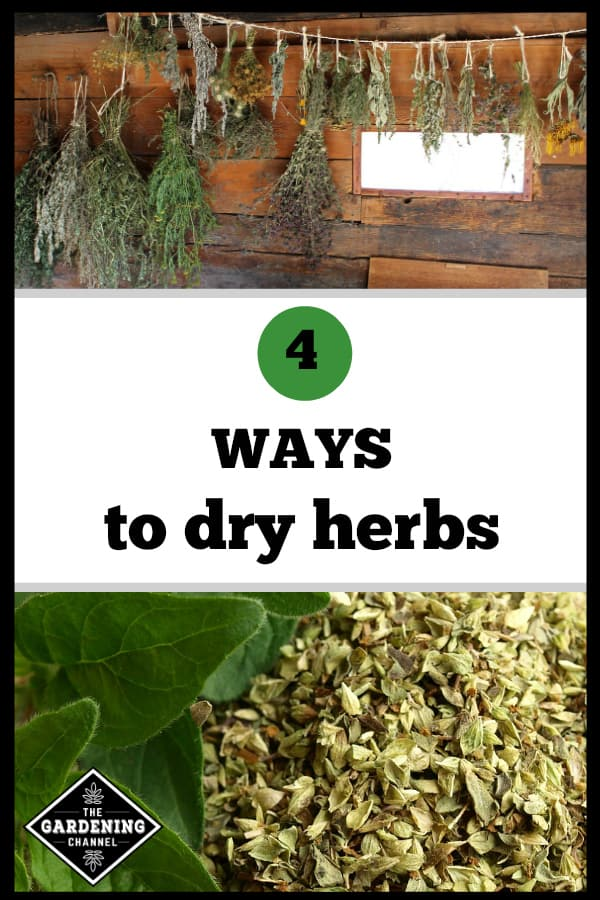 herbs hanging to dry and closeup dried oregano with text overlay 4 ways to dry herbs