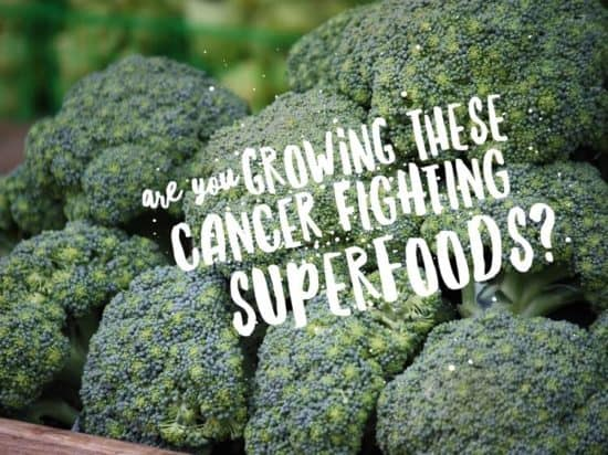 cancer fighting superfoods you can grow