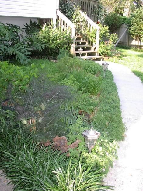 A broadcast herb garden
