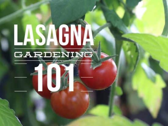 how to make a lasagna garden no till