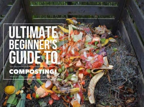 composting 101 for beginners how to make compost