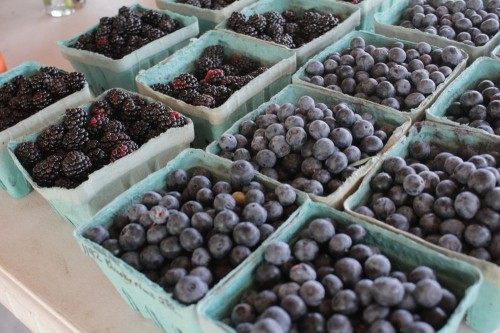blueberries, rich in polyphenols
