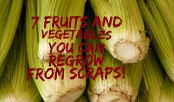 7 fruits and vegetables that can be re-grown from scraps