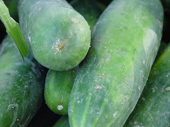 Cucumbers are easy to grow