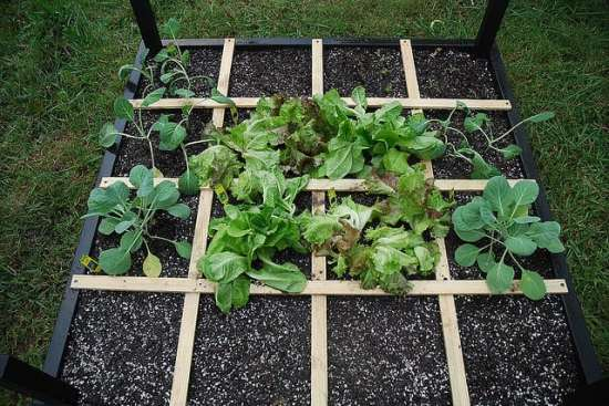Square foot gardening method