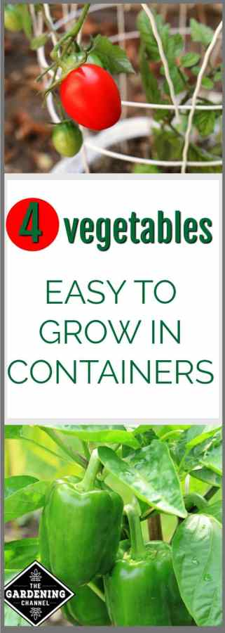 vegetables to grow in containers