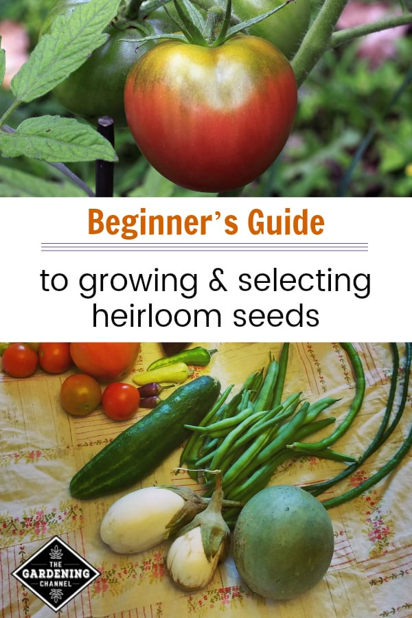heirloom tomatoes and vegetables with text overlay beginners guide to growing and selecting heirloom seeds