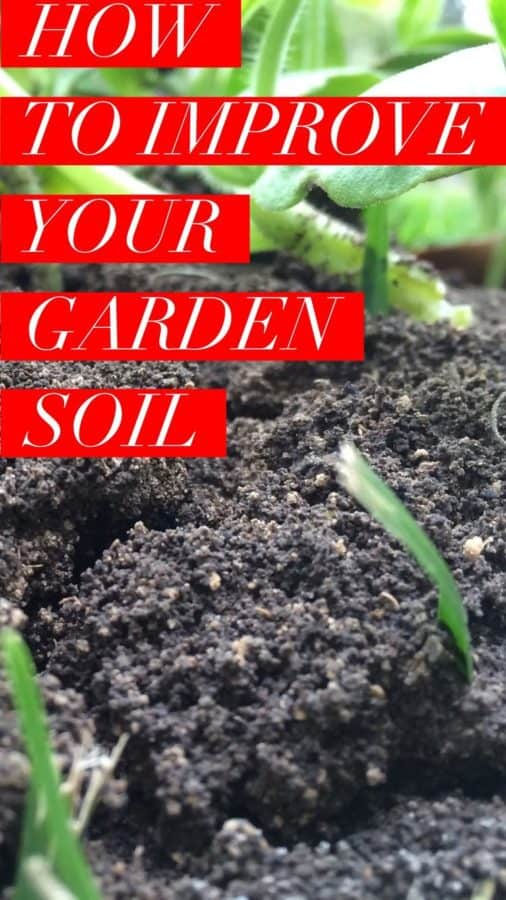 learn how to improve your garden soil for a more productive vegetable garden