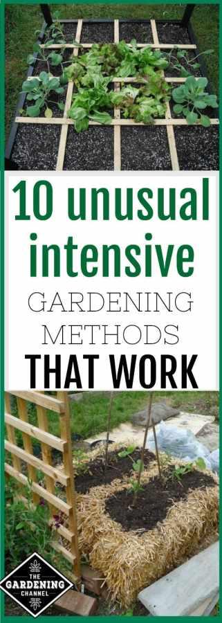 intensive gardening methods