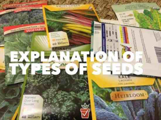 types of seeds and what they mean