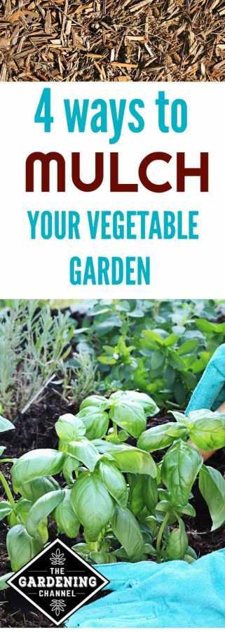 4 Ways to Mulch your Vegetable Garden