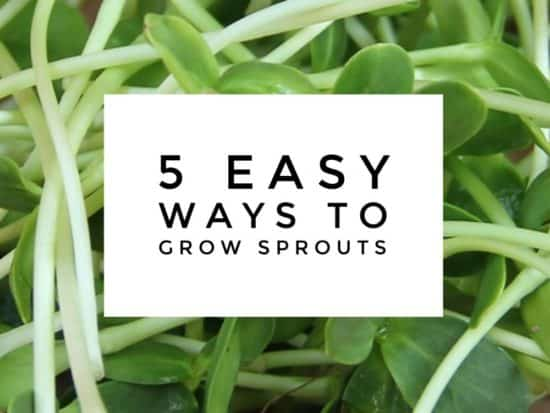 5 Ways to Grow Your Own Sprouts
