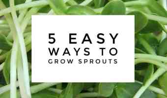 5 Easy Ways to Grow Your Own Sprouts